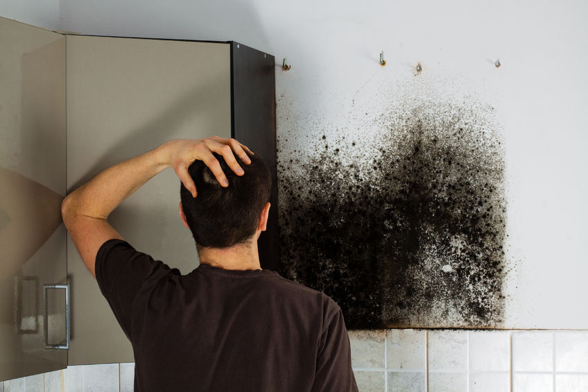 51674192 – man shocked to mold a kitchen cabinet.